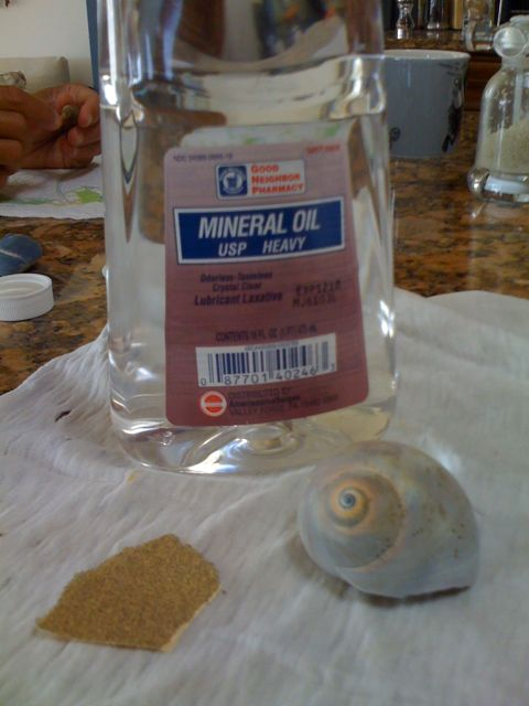 How to Clean Seashells