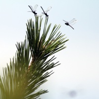 The LBI Flies, Dragonflies, and Wind Report, July 2012. Long Beach Island, NJ