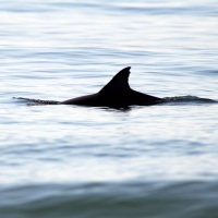 Tips For Spotting Dolphin On LBI