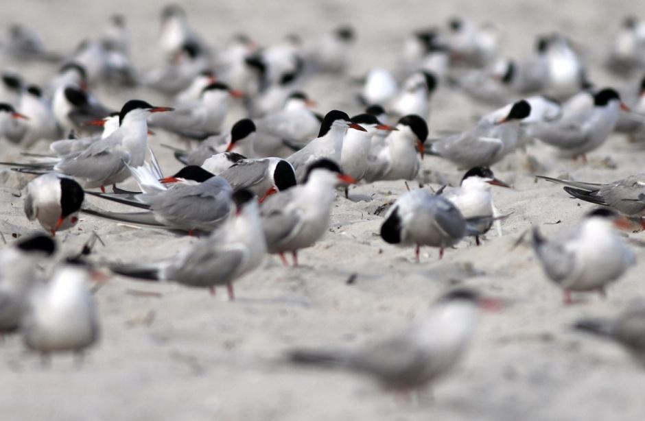 Terns waiting their Turns