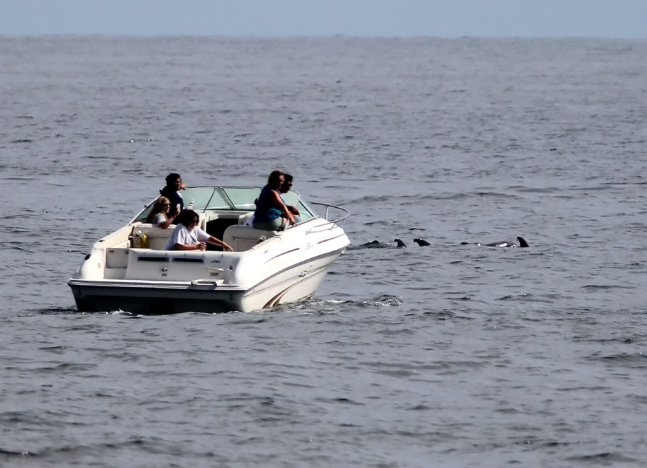 The only real downer were these clowns: the Dolphin hate these people. It is illegal to go within 50 yards of a marine mammal. This type of stalking is particularly lame. You scare them off and disrupt their mating, feeding, and play, plus you ruin it for the rest of us on the beach. The last thing you want is for wild Dolphin to get comfortable around boats: that's how they get killed.