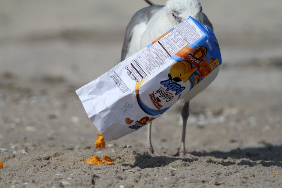 He was definitely hiding because he clearly knows how to work a bag of Goldfish (TM)