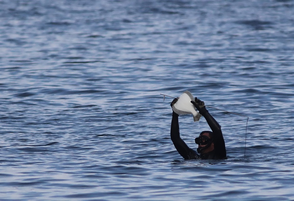 Spearfisher-people easily snagged fluke in the crystal water