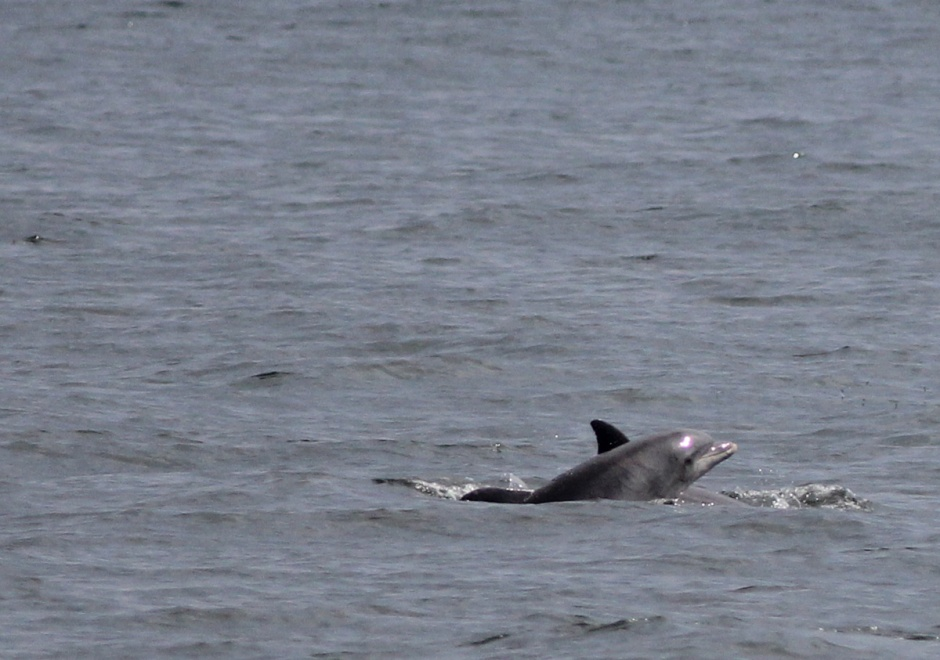 Even the Dolphin were smiling