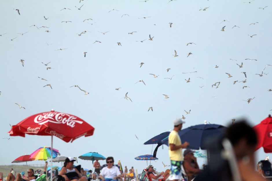 Terns flying in untold number to the sea
