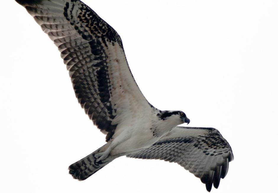 Even the Osprey came home empty talon-ed