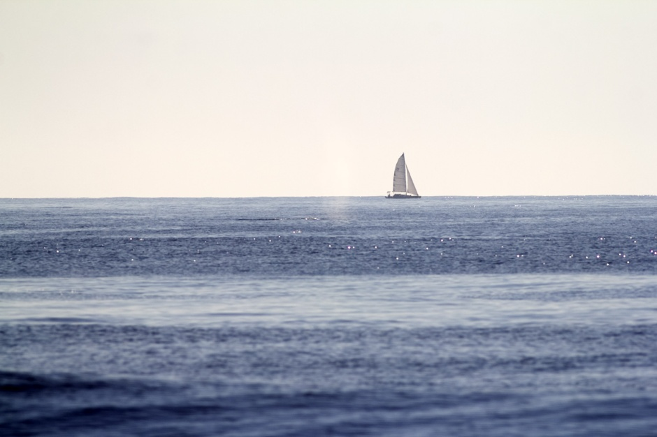 "Bonus Shot: Distance. Lots of folks ask ""How far out was it?"". That's tough to say. My answer is ""Not too far, but pretty far"". Here is the earliest shot I got. This is from shore through a 400ml lens of the whale blowing. The sailboat in the background might help give a sense of where it was."