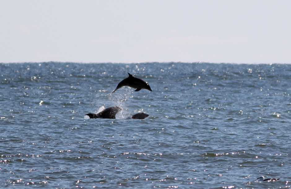 AM Dolphin are Active