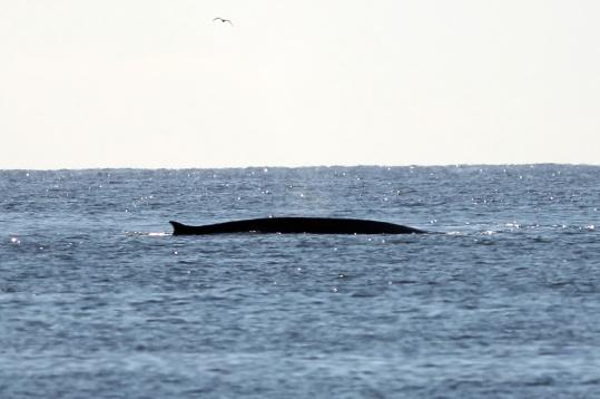 Whale Sightings