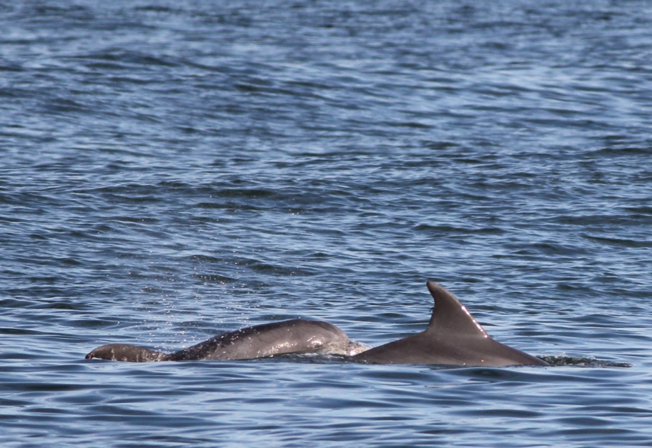 PM Dolphin are sleepy and slowy.