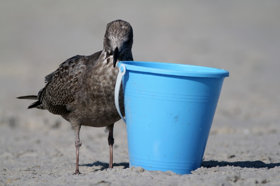 """Something is not quite right with little Cheezball. He is completely obsessed with the water bucket. He spent the whole day sitting near it, nuzzling it, playing with it. We call it his """"buck buck"""""""