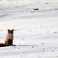 How To Look Foxy @ The Beach: Fox on LBI