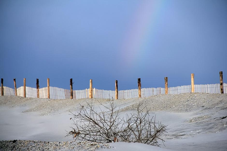 ... new dune fence