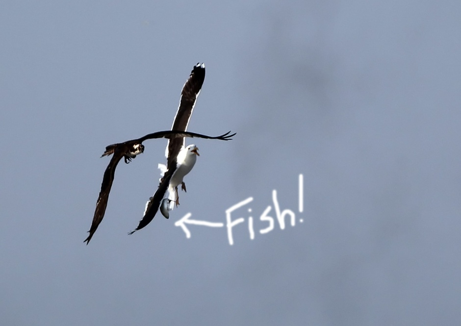 Osprey Foulups, Bleeps, and Blunders: Caught on Tape