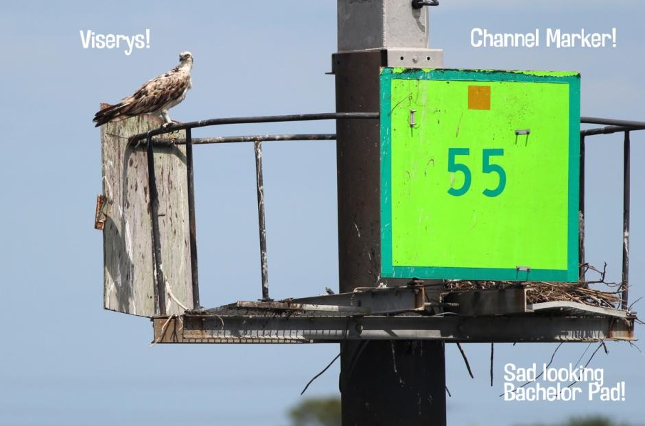 House Of Viserys: Channel Marker #55, just off LBI in Harvey Cedars.