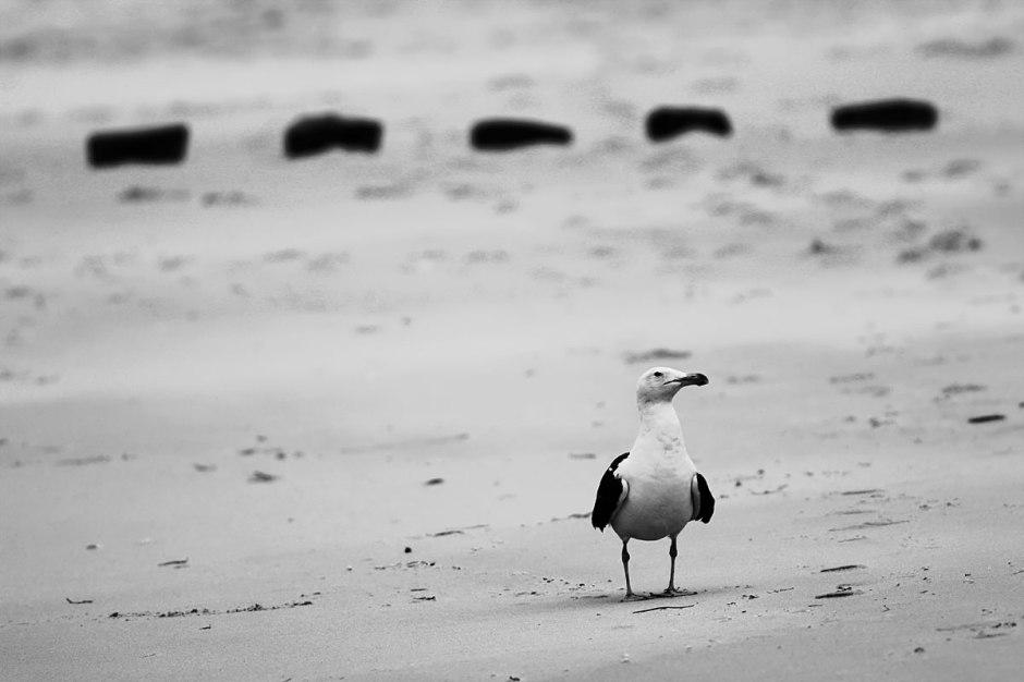 Desolate cold beaches