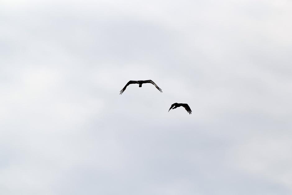 Dude, Double Osprey