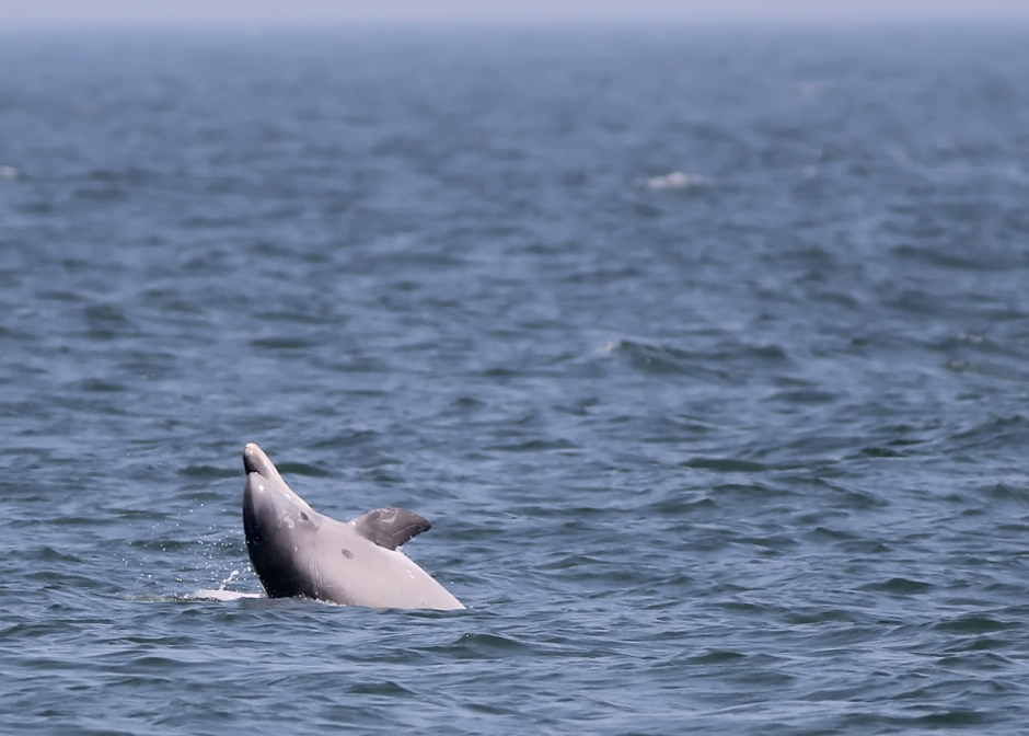But today was a full on Dolphin Party.