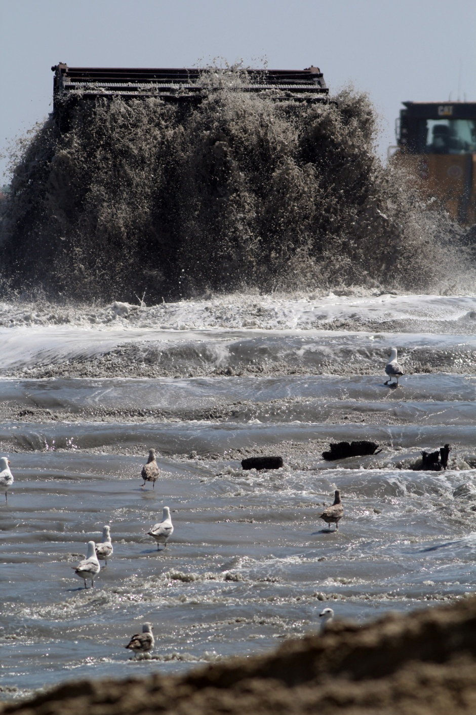 "Gulls are loving the river of hastily dredged ""stuff"" coming straight from the sea floor."