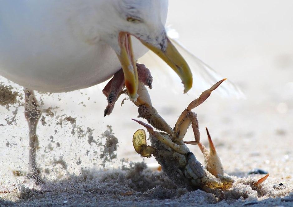 """Iz caught u!!""... ""No, Iz caught u!!!111!!"" Poor Big Poppa gets a reminder that crabs bite back."