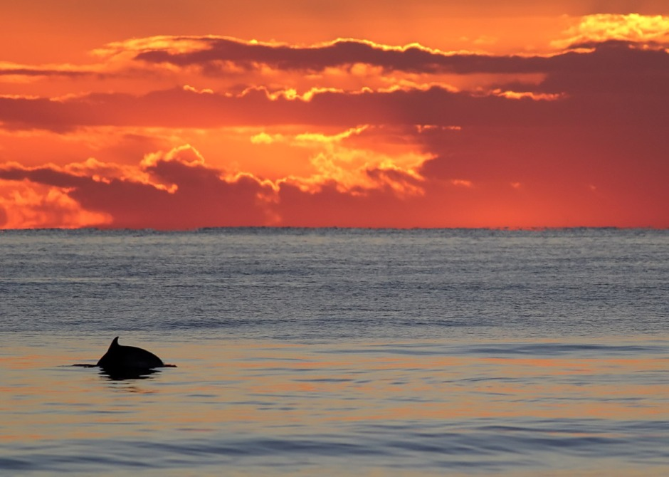 Sunrise Dolphin r the best Dolphin