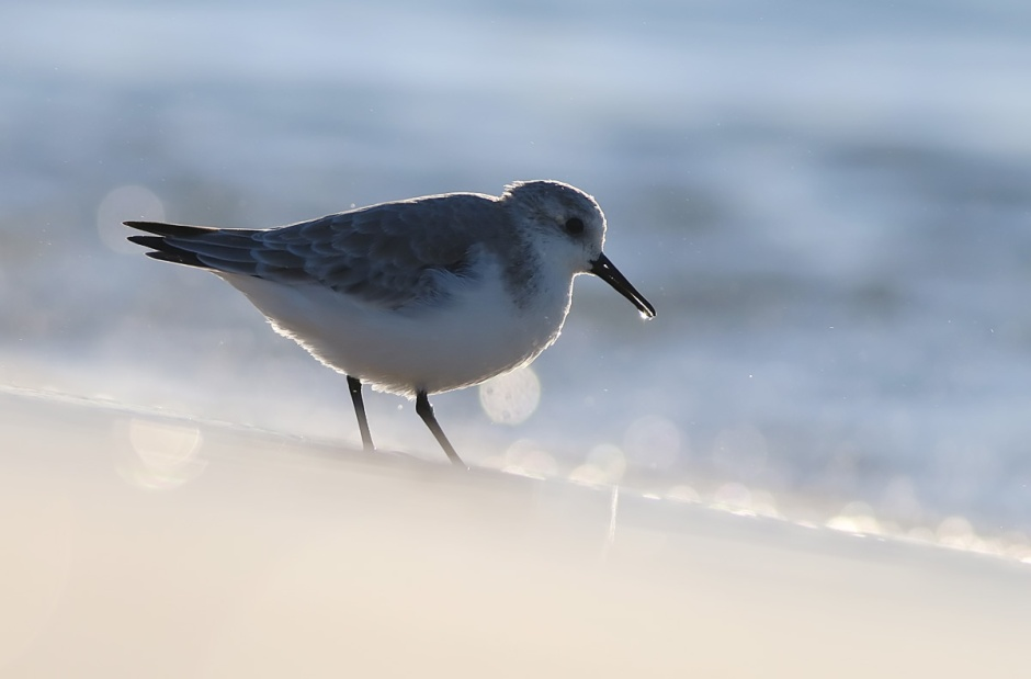 Sanderling, I'm sorry I said you were like bland rice.