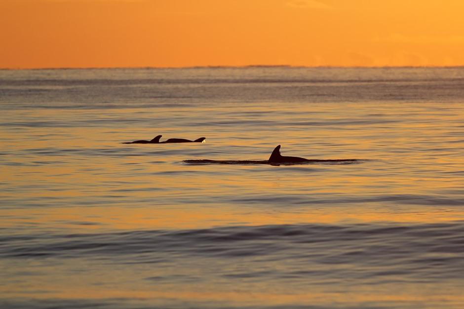 Bonus sunrise Dolphin