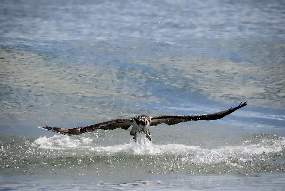 Check out all that water pouring off Osprey