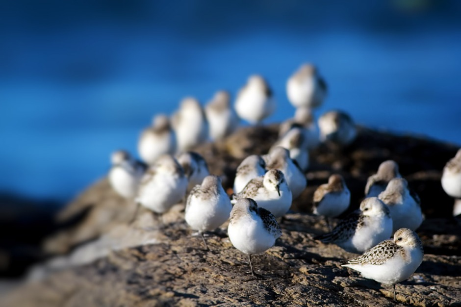 Rock Of Sanderling