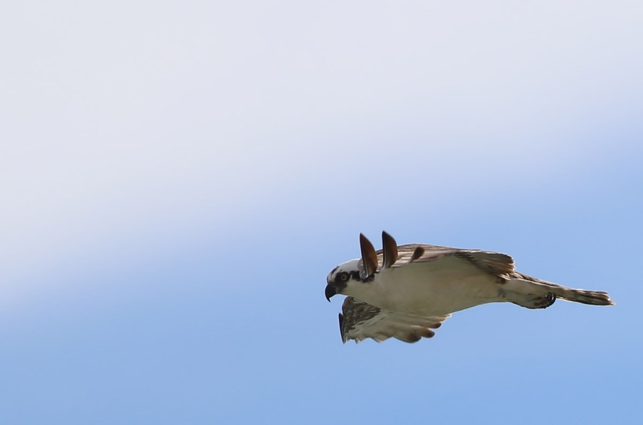 You sure are Osprey. You sure are.