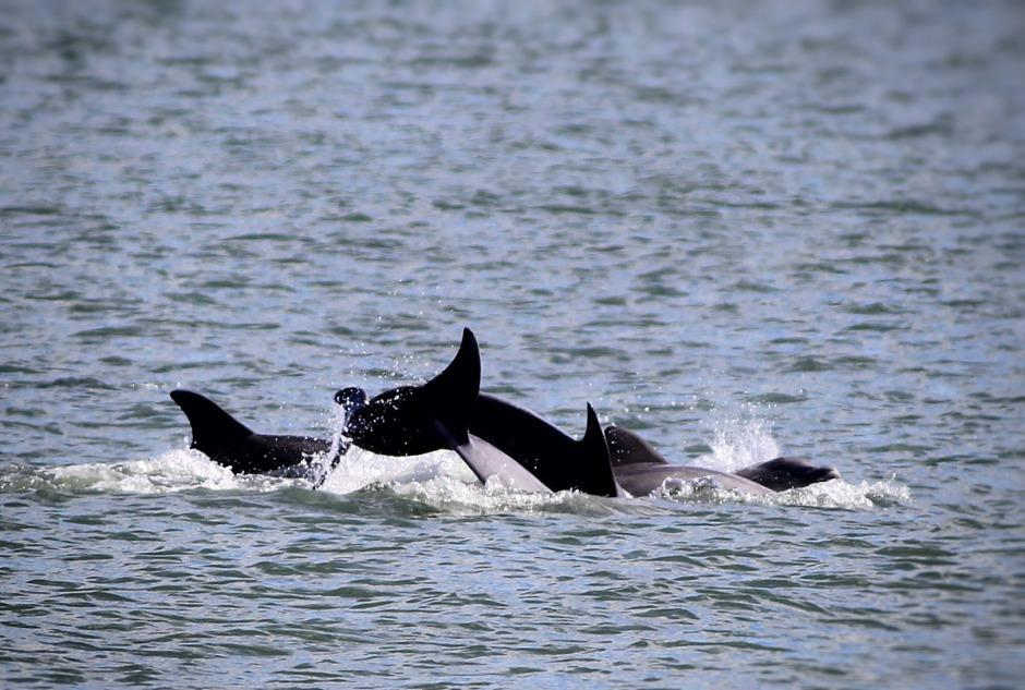 Dolphin Pileup