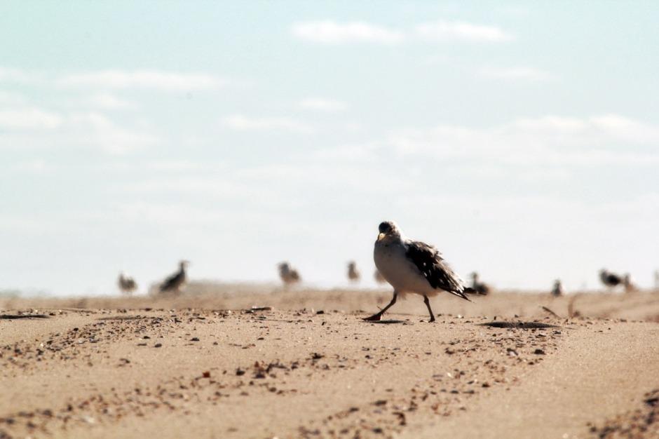 While Big Poppa hunted the desolate beaches