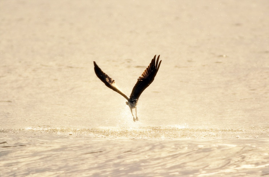 Even though Osprey are hand crafted with the finest water repellent technology, they still need to get that water out.