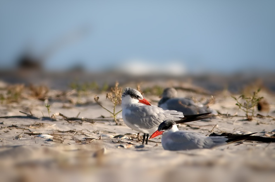 Our Tern to Rest