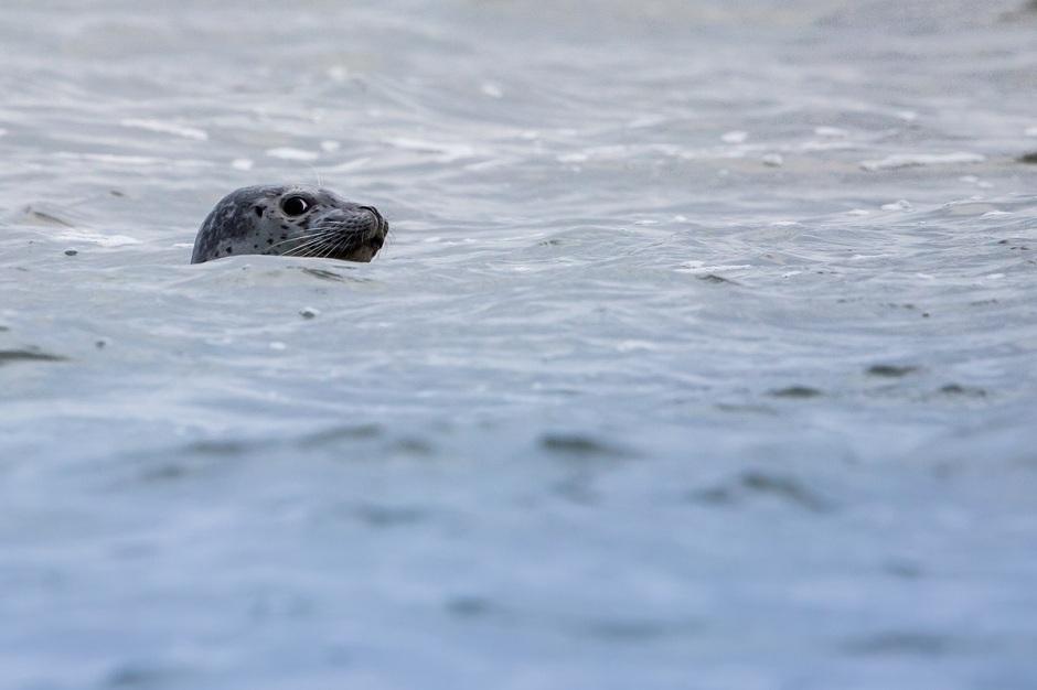 Seal Paranoia