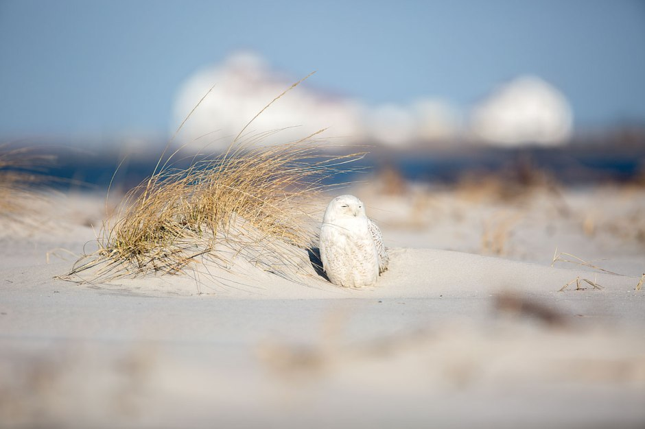 Island of Sun & Snow
