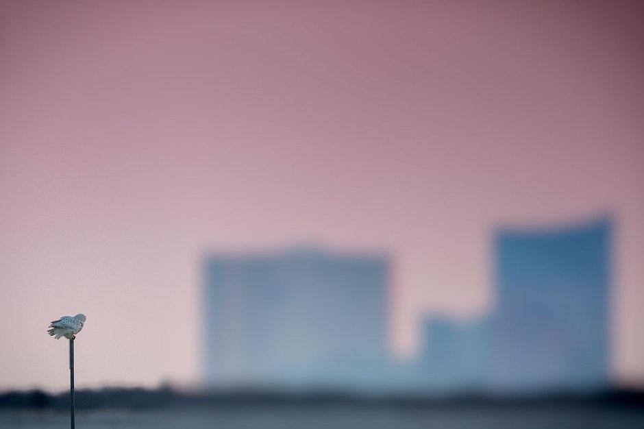 Atlantic City. Dream big little fella, dream big.