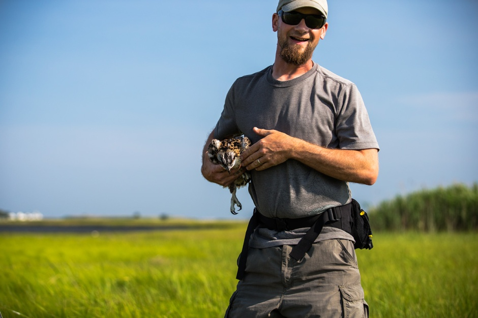 Ben Wurst talks us into it: every Osprey nest that can be checked, and every chick that can be banded in New Jersey for future tracking is a huge victory for us and the Osprey.