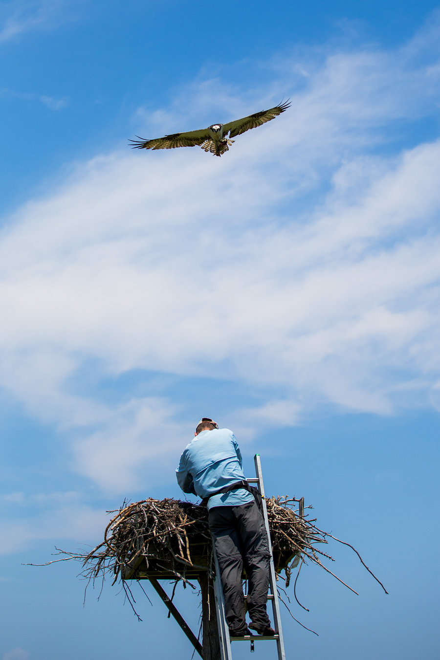 But when you first hear the WHOOOSH and feel the breeze of the Osprey grazing your precious head... well... you wonder how you got yourself into this crazy situation and hope you told your loved ones that you loved them