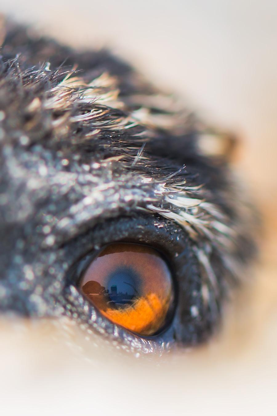 First human, as seen through an Osprey's eye