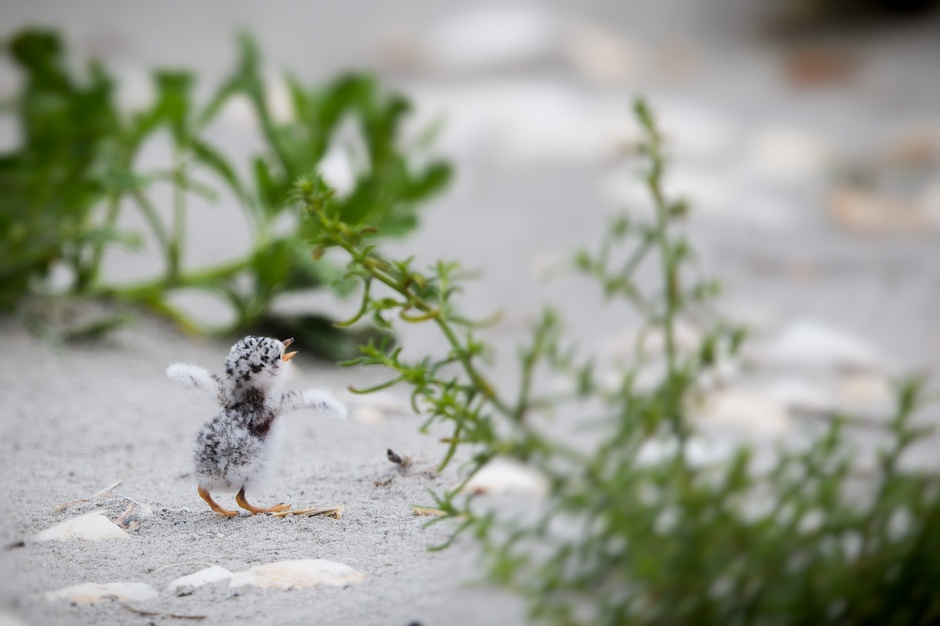 The itty bitty hatchlings nearly know what they are doing, but give-it-a-go and develop the skillz