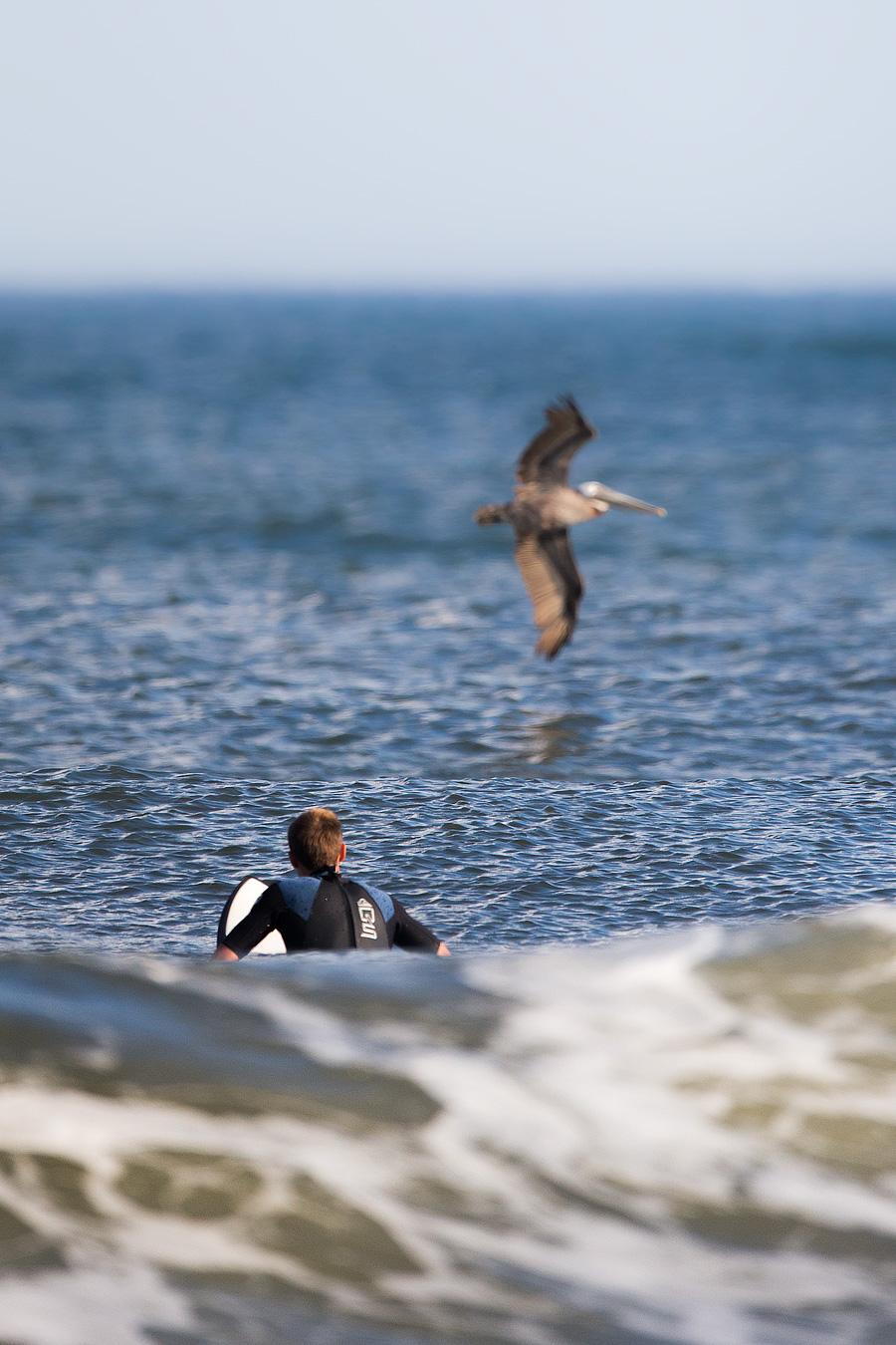 Surflican