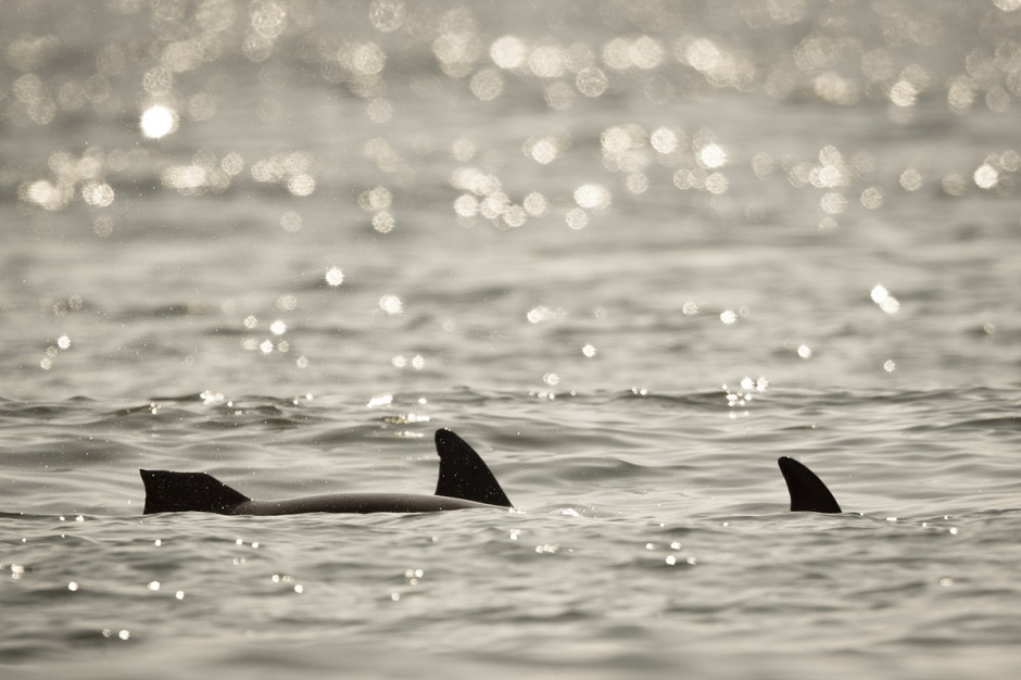 """Looks like this little lady's dorsal fin had an """"incident"""""""
