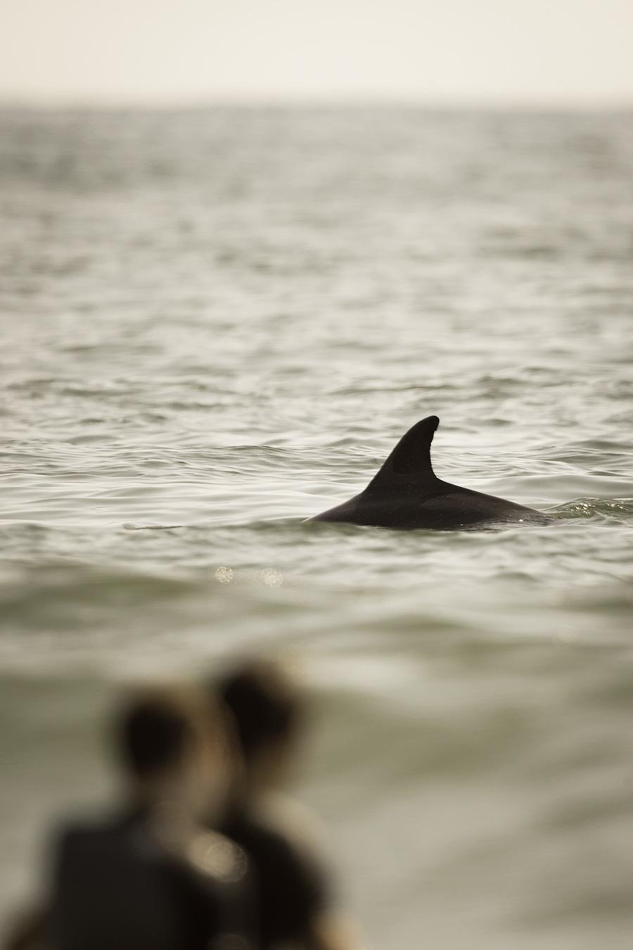 Dolphin Among Us