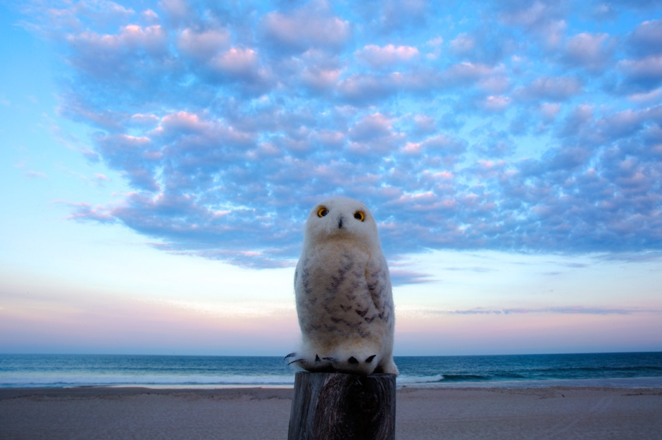 An UnrealBirds Snowy Owl soft sculpture awaits the big show durning the LBI sunset tonight.
