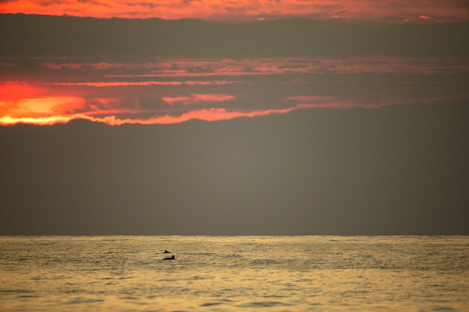 Sunrise Dolphin are the best Dolphin.