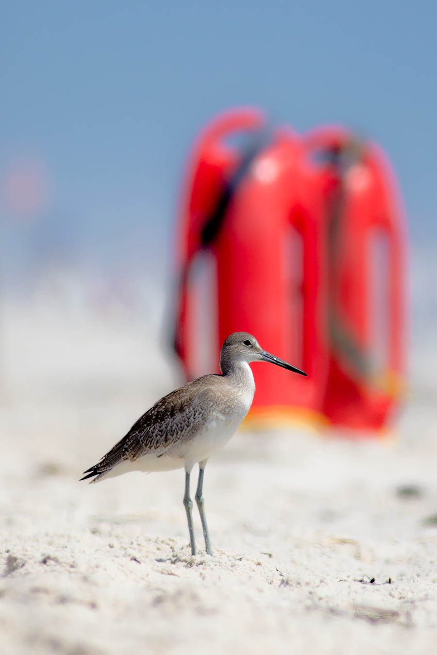 Willet Rescue You?