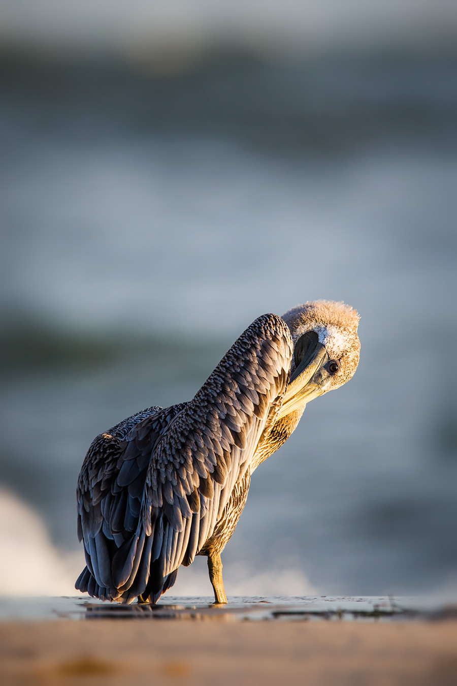 In Florida, this shot would get boring. But on LBI, catching a Pelican on the beach at close range is a doozy.
