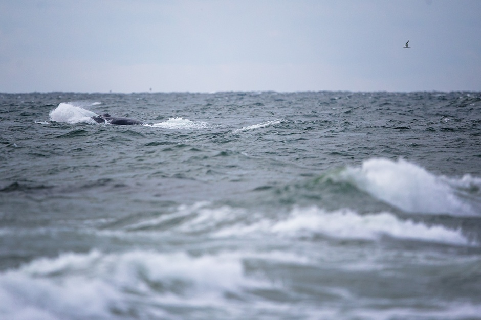 Waves VS. Not-Waves. Can you spot the Humpback?