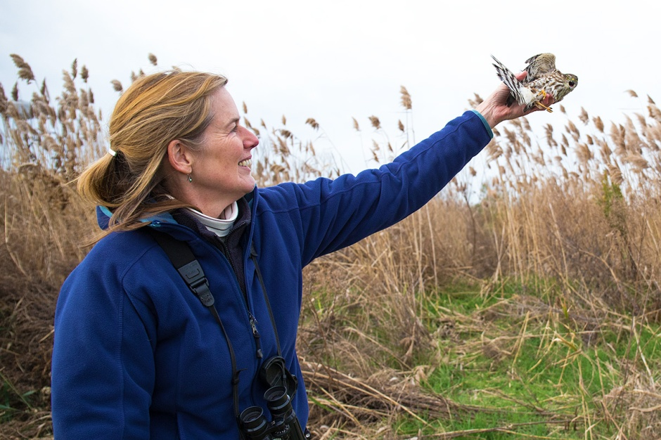 Kathy Clark releases a Sharp-shinned Hawk who, just like us, does not realize all she has done for us.
